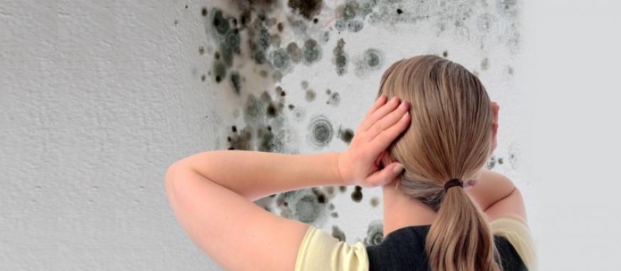 Den bedste pris på fjernelse af skimmelsvamp findes online
